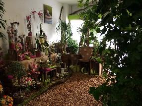 fleurs couleurs nature Genève