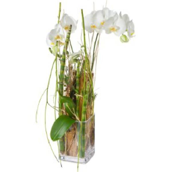 plante d&#039;orchid&eacute;e d&eacute;cor&eacute;e avec vase en verre<br /> A partir de 90.-<br /> (divers couleurs blanc,rose,violet,rouge,orange voir jaune selon vari&eacute;t&eacute;s)<br />  plante d&#039;orchid&eacute;e simple<br /> A partir de 40.-(petite 25.-)<br /> sur commande minimum 1&agrave; 2 jours avant