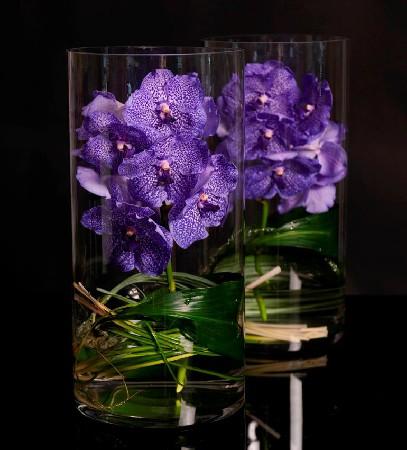composition de vanda( orchid&eacute;e coup&eacute;e)<br /> et contenant en verre) A partir de 65.-<br /> plante avec racine et contenant en verre<br /> A partir de 100.-<br /> plante de vanda &agrave; suspendre.<br /> A partir de 125.-<br /> Sur commande minimum 2 &agrave; 7 jours avant<br /> <br /> <br /> plante